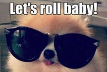 Rolling with Laughter. / Hilarious Pet images and pop culture references!