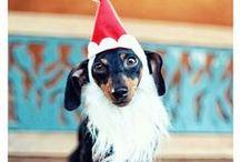 Christmas with your Dog!!