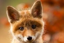 foxy love #keeptheban