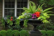 GARDEN:  CONTAINERS, WINDOW BOXES / Gorgeous containers and window boxes.
