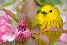 GARDEN:  THE B's-Birds, Bees, Bugs, Butterflies. . . / Bees, birds, bugs, bullfrogs, bunnies, butterflies. . . / by Lydia Moss
