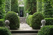 GARDEN:  HEDGES, TOPIARY, BOXWOODS / Hedges, Boxwood, yew and topiaries of all sizes.