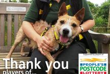 Our Partners & Corporate Friends / We look for partners that are well aligned with our brand and through working together can help ensure that dogs have a happy, healthy life. We look for brands that are fun, friendly and positive – like us; and who can help encourage visitors to our 21 rehoming centres nationally. After all, our wish is for every dog in our centres to find it's forever home with a new owner!