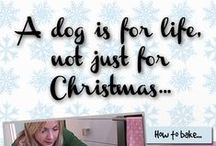 Christmas at Dogs Trust / A dog is for life, not just for Christmas.