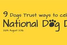 National Dog Day 2016 / 9 Dogs Trust ways to celebrate #NationalDogDay this Friday!  We've taken inspiration from National Dog Day (26th Aug) and put together a list of Dogs Trust ways to celebrate this paw-tastic day!