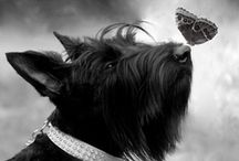Pets / by Ali Maxine