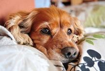 My Pet HealthZone / Helpful pet tips from our veterinary experts.