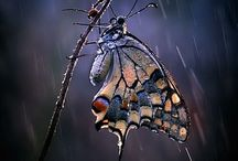 butterflies / Pretty in many shapes & sizes, butterflies are God's beauty in a whisper!  / by Pam Wallace