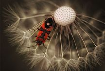 bugs / by Pam Wallace