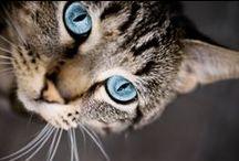 Pet Owner Tips / by VPI Pet Insurance