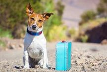 Traveling With Pets / by Nationwide Pet
