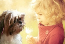 Come and visit our blog and subscribe. / This is a blog where original content is created as a tool to help Parents and family discuss spiritual and moral issues with their children. Maya is a puppy that speaks in rhyme all the time and when I read her a quote, she recites a poem that teaches the lesson. There are original illustrations poems adventures and bedtime stories there are also poems and quotes for adults. / by Rich Okun