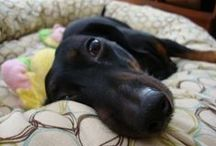 VPI-Protected Pets / by VPI Pet Insurance