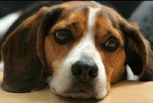 Pet Toxicity Center / by VPI Pet Insurance