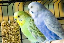 Avian and Exotics / by VPI Pet Insurance