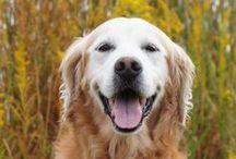 Pet Cancer Awareness / by VPI Pet Insurance