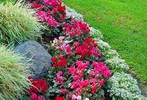 gardens / by Kristi White