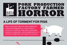 NZ Pig Infographics