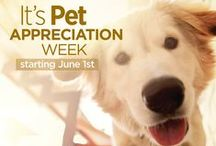 Pet Appreciation Week / Not that we need an excuse to spoil our furry family members :)