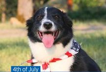 Fourth of July Pet Tips / VPI encourages pet owners to plan ahead with safety precautions to ensure our pets are protected from noise phobia, food toxicity, pet drowning and getting lost.  / by Nationwide Pet