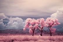 Colourful - ROSE