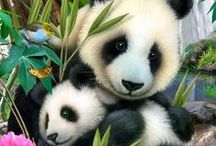 ❤️❤️❤️ PANDA ❤️❤️❤️ / Showing Sock Panda's love for their favorite animal and namesake: the fluffy, playful, and adorable panda! ❤️