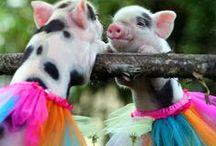 adorable creatures.
