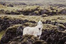 horses / by Bambi Elizabeth