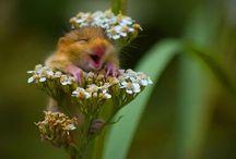 Funny Animal Photos