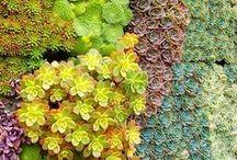 Gardens / by Lane McNab Interiors