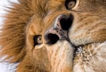 animals / by Claire Scott