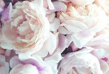 Wedding Wish List / by Amanda Fulmer
