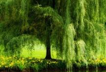 TREES / Trees ~ Bottle Trees ~  / by Darlene Carter-Johnson