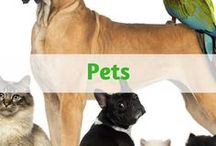 Everything for Pets / Everything for pets - Pet supplies plus cute and funny pet pictures with a collection of pet essentials - collars, leashes, cages, pet safety, and more. Healthy pet Recipes. Natural and affordable pet care products, tips, and useful information.