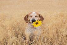It's a dogs life.. / My love & appreciation to man's best friend.   / by Stephanie Harman