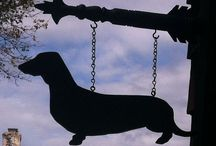 doxie love / my favorite type of dog. I want a black doxie so bad. :(