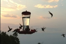 Hummingbirds - my FAVORITE / by Dawn McCombs