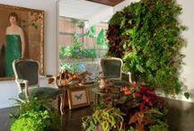 Plants, plants, plants! / indoor plants, gardening, design / by Ivey Lynn