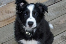 Remembering our Dog Checkers aka Chex Mix / by Sue Bergman