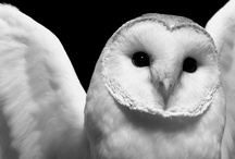 Owls / by Jaime Sweany