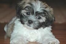 Our precious new puppy, Sadie. / by Sue Bergman