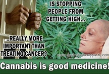 """Legalize Cannabis! / In addition to this Board, please check out my new Facebook page:  """"Current Research in Medicinal Marijuana Topics.""""     This topic is important to me because of the injustice of having to watch my husband die in unnecessary pain, simply because his doctor couldn't legally prescribe medicinal cannabis.  / by Arlene Allen"""
