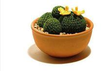 Plant crochet / by Kyla Story