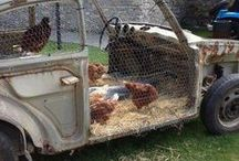 Chickens are people too