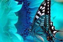 Butterfly Love / by Laura Buxbaum Landry