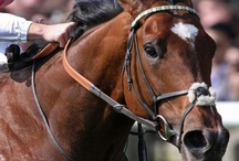 Horse Racing / Photos of great racehorses etc.