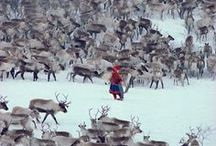 Skandinavian | Sami / Yo, don't diss my heritage.