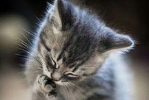 Meow / I love cats!
