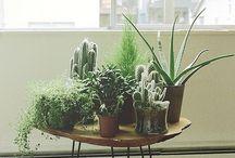 Interiors / PLANTS. / Interior styles . Interior . Inspiration . Home . Home inspiration . Plants .