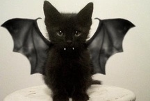 kittehs / by Kelly George